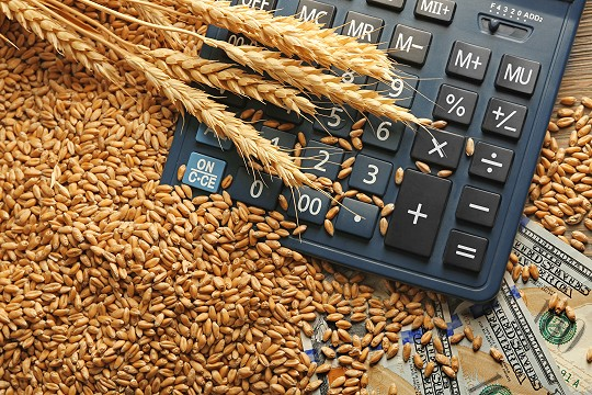 Dollar bank notes, calculator and wheat grains for agricultural loan concept